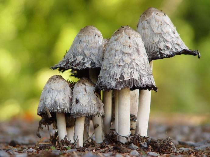 마법의 버섯의 모습. - Flickr 제공